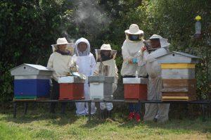 Les ruches de quelaines saint Gault - projet du Conseil municipal des enfants 2020